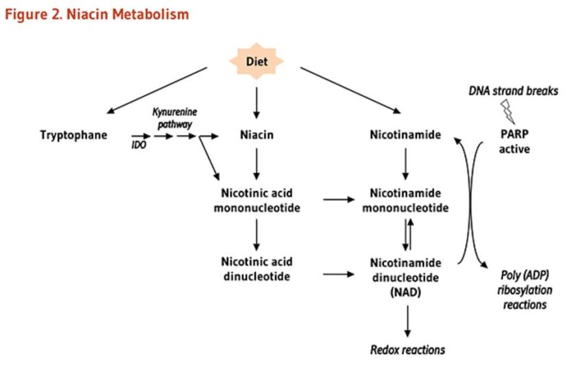 tryptophan and niacin