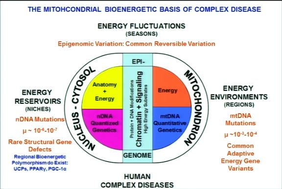 nucleus-is-energy-limited