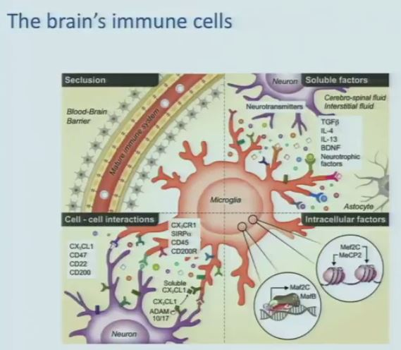 how to build immune system in adults
