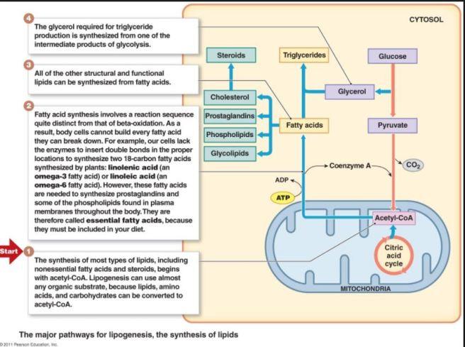 lipids 1